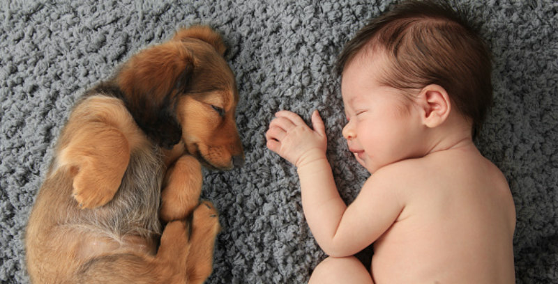 Are pet allergens good for children?