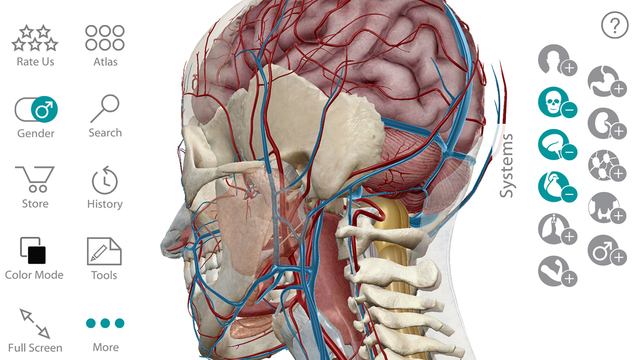 Human Anatomy Atlas 3d Anatomical Model Of The Human Body Mobile